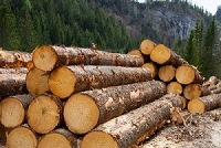 Announcement of Reforms to the Illegal Logging Laws